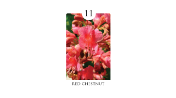 11 red_chestnut