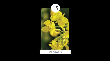 15 mustard
