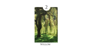 2 - willow