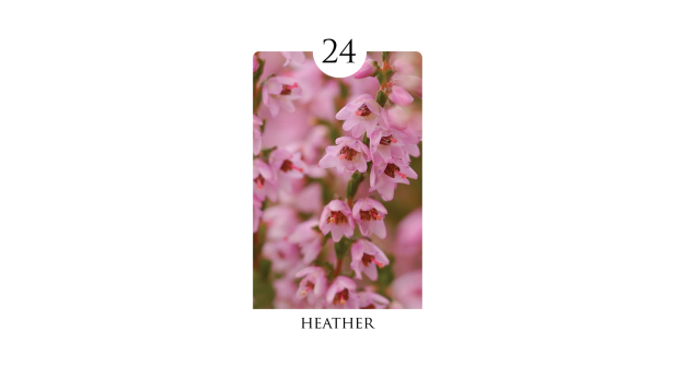 24 heather