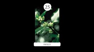 25 holly
