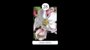 28 crab apple