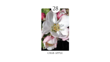 28 crab apple