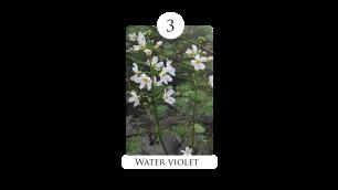 3 water_violet