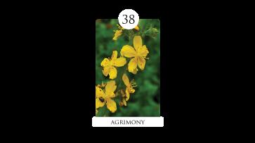 38 agrimony